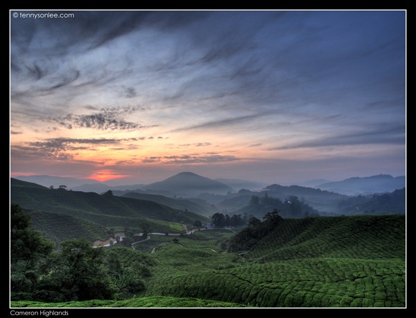 Cameron Highlands (7)
