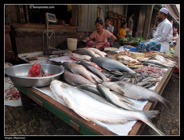 Yangon wet market (7)