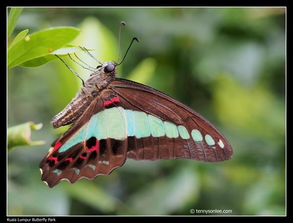KL Butterfly Park (10)