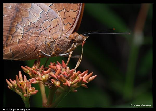 KL Butterfly Park (2)