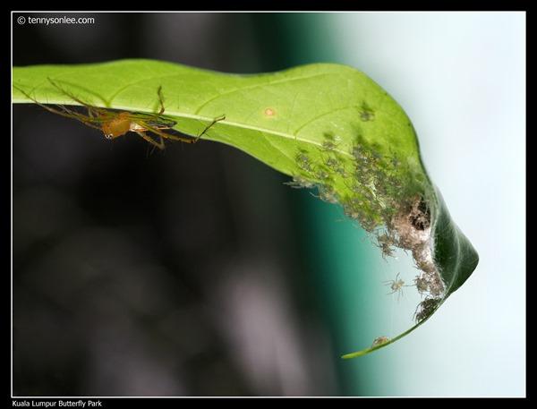 KL Butterfly Park (6)