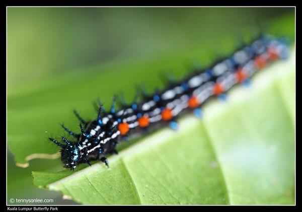 KL Butterfly Park (7)