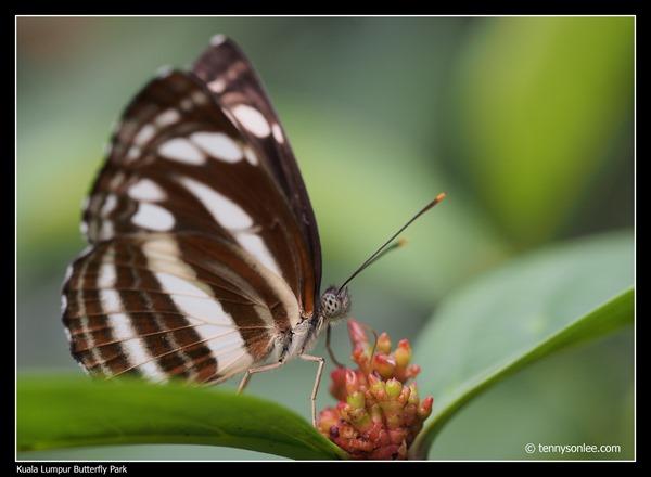 KL Butterfly Park (9)