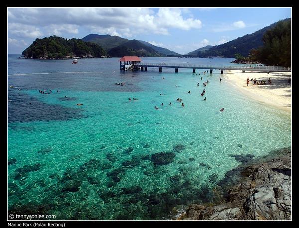 Pulau Redang Marine Park (6)