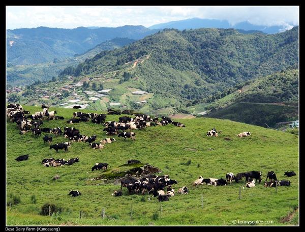 Desa Dairy Farm