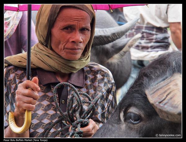 Pasar Bolu Buffalo Market (Tana Toraja) (16)