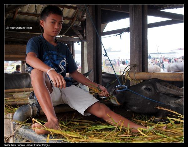 Pasar Bolu Buffalo Market (Tana Toraja) (4)