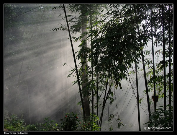 Tana Toraja (2)