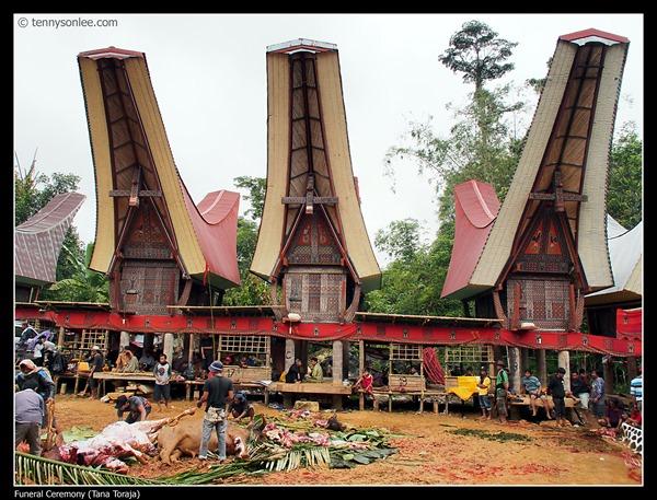 Tana Toraja Funeral Ceremony (7)