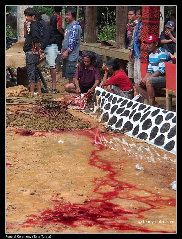 Tana Toraja Funeral Ceremony (8)