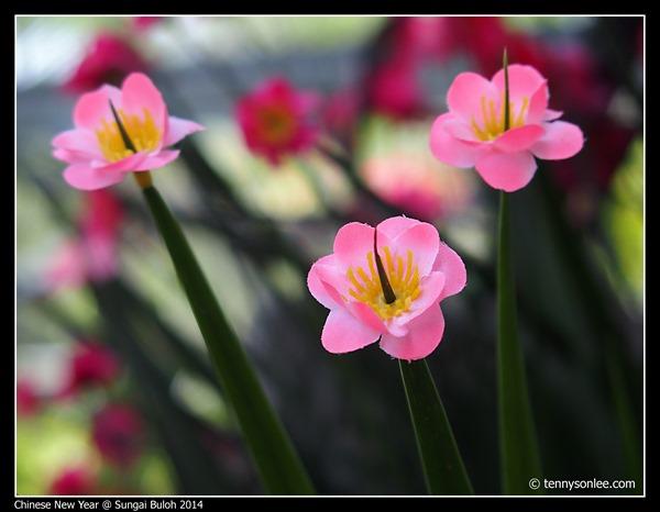 Chinese New Year Flora at Sungai Buloh 2014 (6)