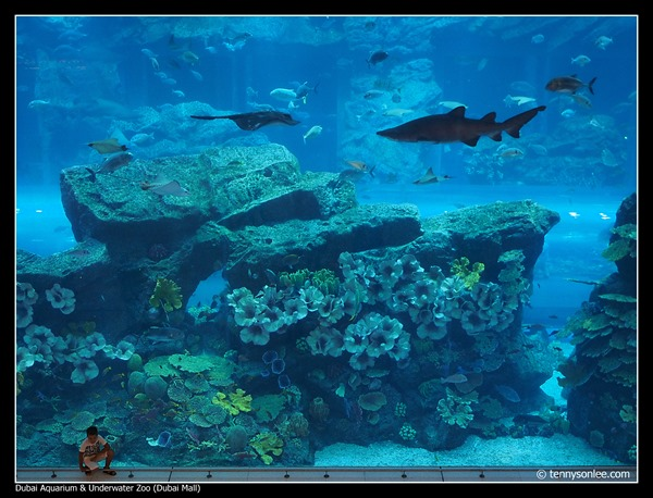 Dubai Aquarium and Underwater Zoo (10)