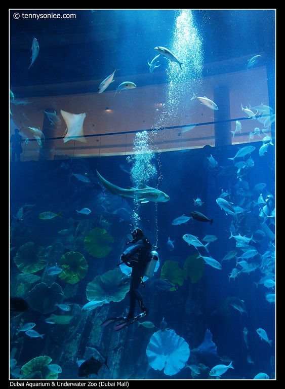 Dubai Aquarium and Underwater Zoo (2)