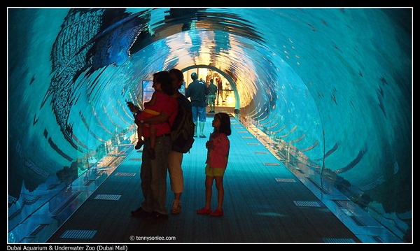 Dubai Aquarium and Underwater Zoo (3)