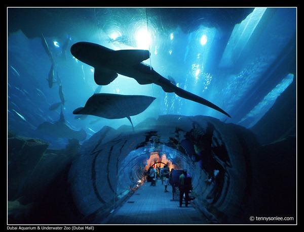 Dubai Aquarium and Underwater Zoo (4)