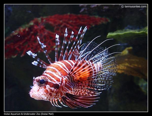 Dubai Aquarium and Underwater Zoo (6)